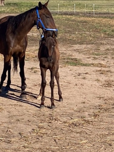 Rocky-Ohoulihan-Filly-Front