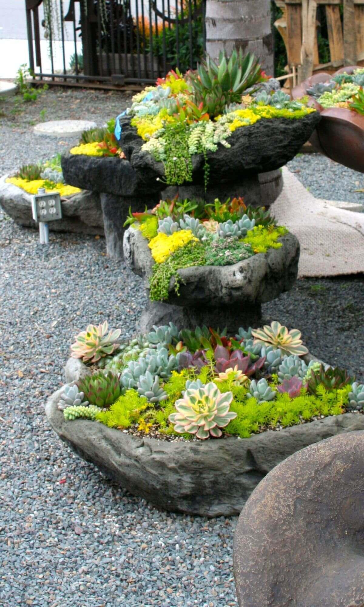 7 Showy Succulent Rock Planters