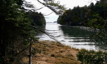 To protect Quahog Bay, land trust seeks to conserve 57-acre forest on Great Island