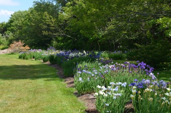 Eartheart Garden, South Harpswell, June 2015