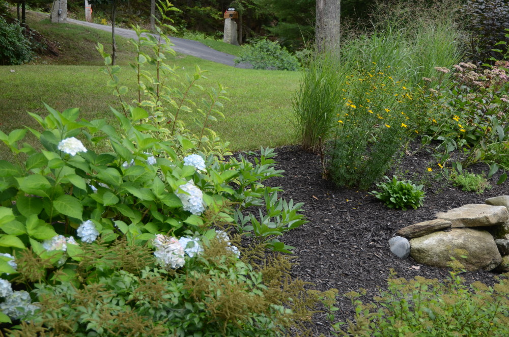 Diane Loughlin's garden