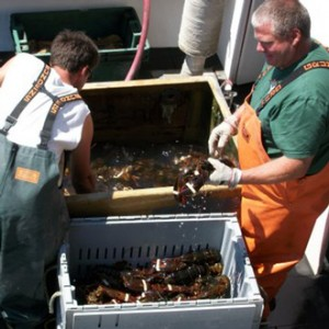 Harpswell Lobster Pounds (5/5)