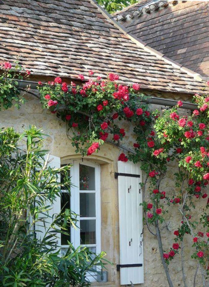French Country Decor Let The Roses Climb Up The Wall - Harptimes.com