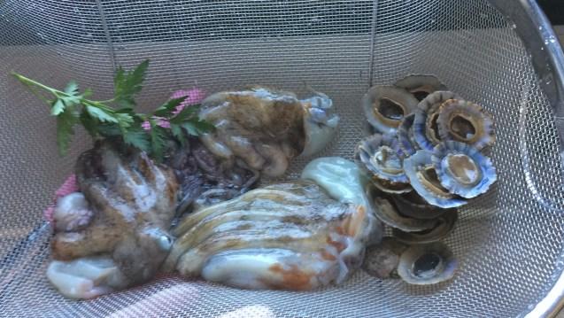 Oktopus Krake fang fangen zubereiten zubereitung töten Rezept recipe catch octopus