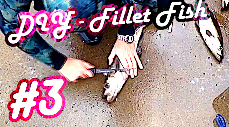 Fisch filletieren filetieren fillet fish filleting Filetiermesser Anleitung Guide Tutorial How to Pollack Spearfishing