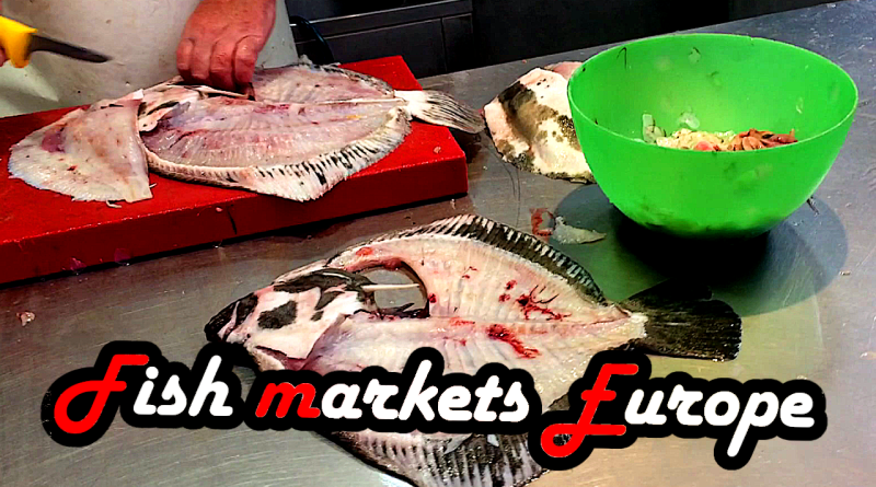 Fish markets market Fishmarket Europe Vienna Venice Palma Valencia fresh Tour Tutorial visit visiting tours octopus buy buying