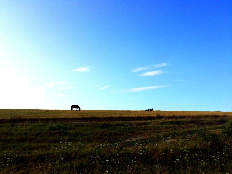 Tag-3-Reisebericht-Luzk-bis-Laniwzi-Ukraine-Ukraine-mit-dem-Auto-Straßen-Straße-Straßenverhältnisse-Pferd-Asphalt