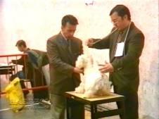 Sopuerta 1998. Canino - 005