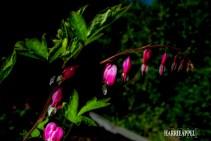 Mid Summer´s Bloom 21
