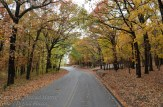 Fall-scene-5