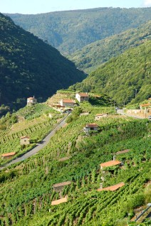 Valdeorras vineyards (HMWS visit)