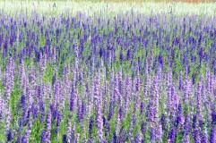Gilroy Flowers
