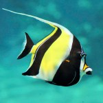 Moorish Idol (EXPERT ONLY)