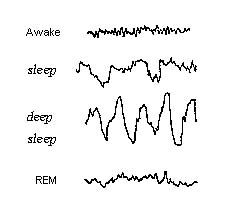 sleepbrainwaves