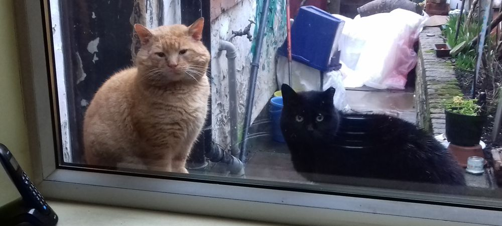 Fickle stray cats