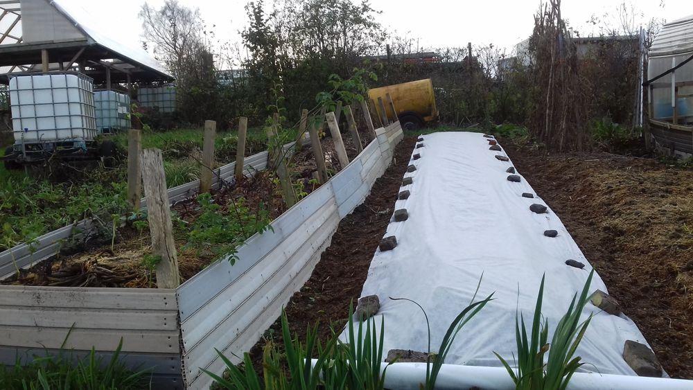 Rye bed protected with fleece