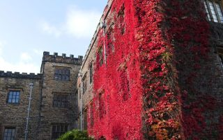 Splenderous autumn ivy on the side of Towneley hall