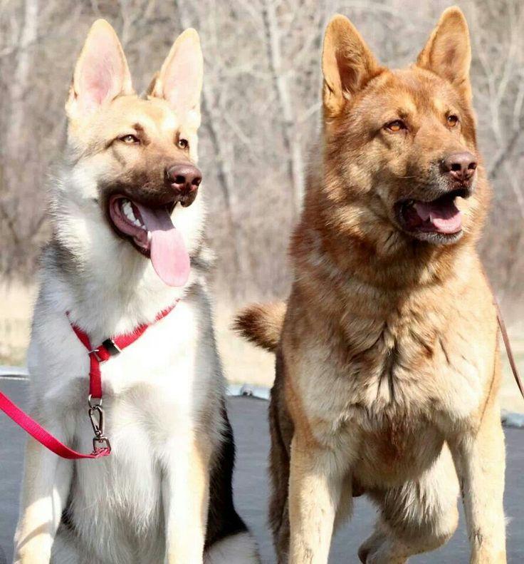 Deze Honden Hebben Een Opvallende Vacht Hart Voor Dieren