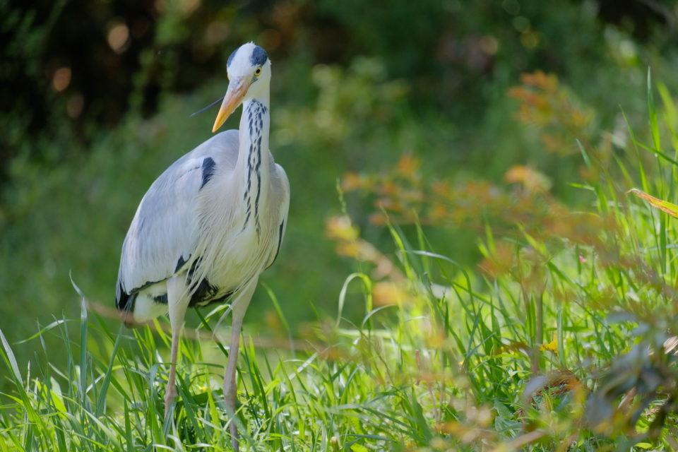 XF55-200 作例 野鳥 ブログ