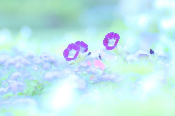 花 タムキュー