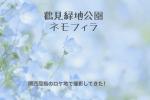鶴見緑地公園 風車 ネモフィラ 写真 ブログ