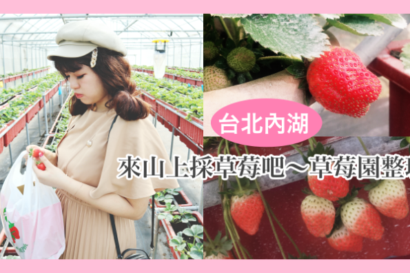 2020台北內湖草莓季|各家草莓園整理、營業時間。一起上山採草莓吧♥♥♥