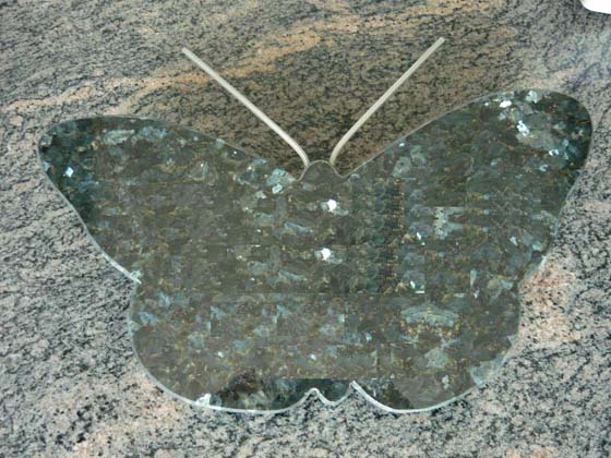 Kleine vlinder in Donker Labrador A034