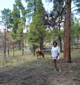In the Kaibab National Forest (Grand Canyon)
