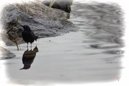 Submission for Photo Challenge, Week 15: Migrating Birds Photo: LaShawnda Jones for Spirit-Harvest.com