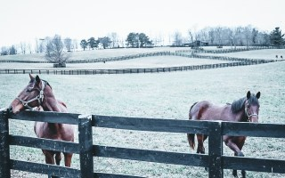 Thoroughbreds in Lexington, KY