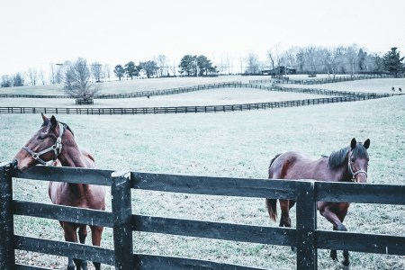 Thoroughbreds in Lexington, KY