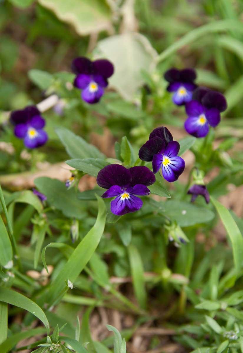 Summer Flowers Pennys Garden A Harvest Beyond My Front