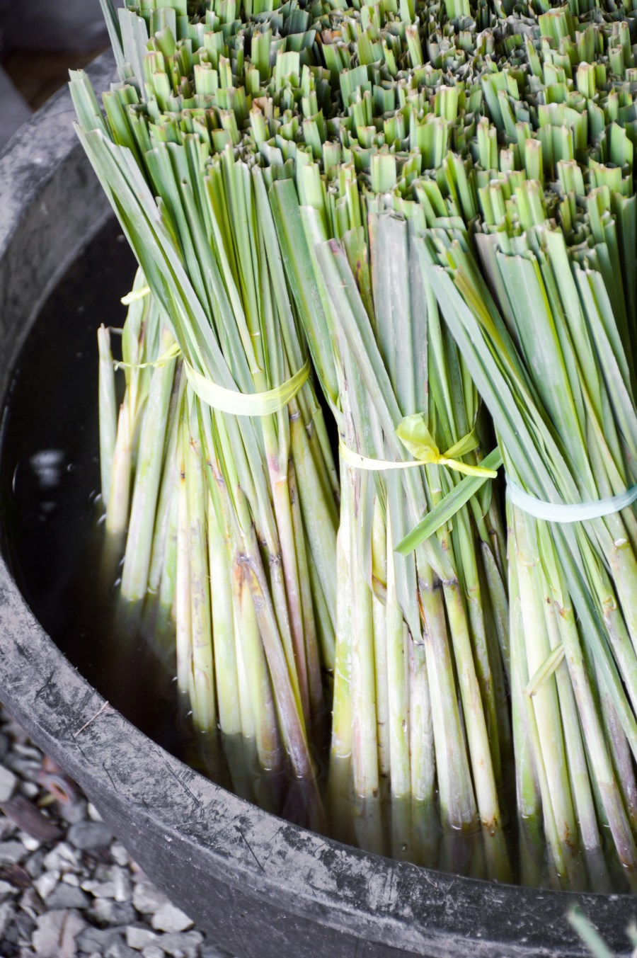 green lemongrass on black enamelware
