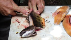 Filleting Trout