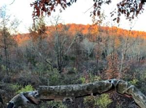 Kentucky whitetail hunting