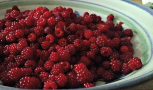 Wild Red Raspberries