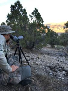 Glassing for Elk in Nevada