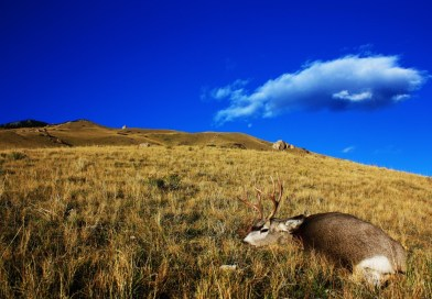 Public Land Mule Deer Spot and Stalk