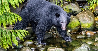 """New Jersey Fish and Game Approves """"Emergency"""" October Bear Hunt"""
