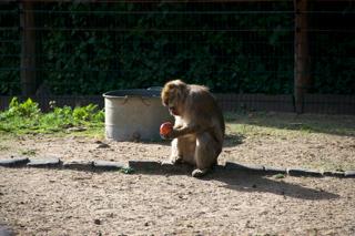 Bild: Affen im Zoo Aschersleben.