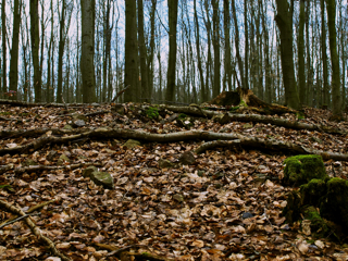 Bild: Die Reste der Kleinen Kuppenburg bei Bräunrode.