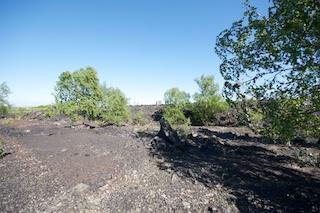 Bild: Die Natur erobert sich ihr verlorenes Terrain zurück - Birken auf der Schlackenhalde der Krughütte bei Wimmelburg.