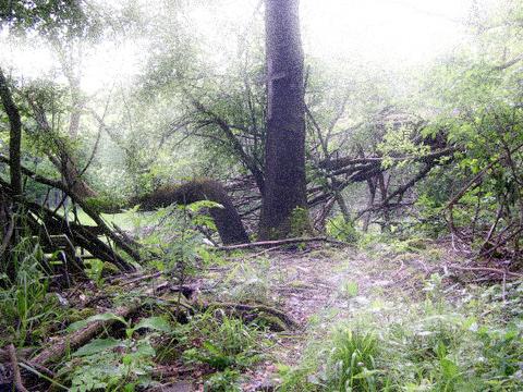 Bild: Die Wüstung Lichthagen bei Gorenzen ist heute überwaldet.
