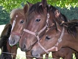 Bild: Pferdeportrait.