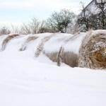 Bild: Winter 2010/2011 -Verschneite Strohballen in Greifenhagen.