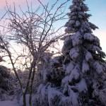 Bild: Winter 2010/2011 - Abendstimmung in Greifenhagen.