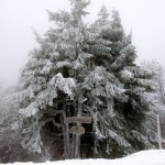 Bild: Winter 2010/2011 - Eisnebel auf dem Ravensberg bei Bad Sachsa.