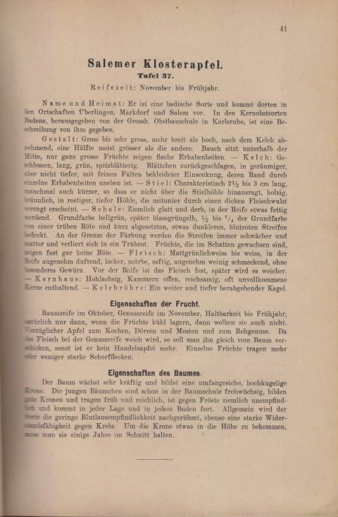 Bild: Beschreibung des Salemer Klosterapfel im Buch Unsere besten Deutschen Obstsorten Band I: Äpfel von 1923.