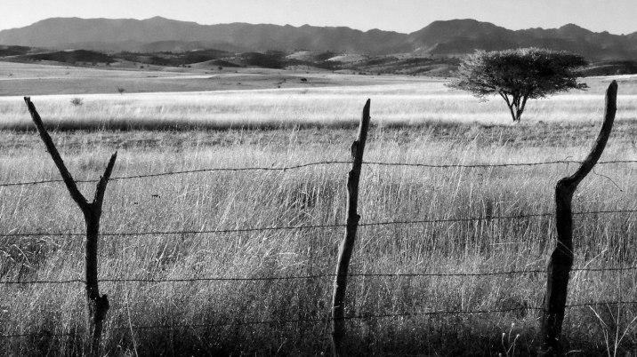 This grassy field caught my eye.