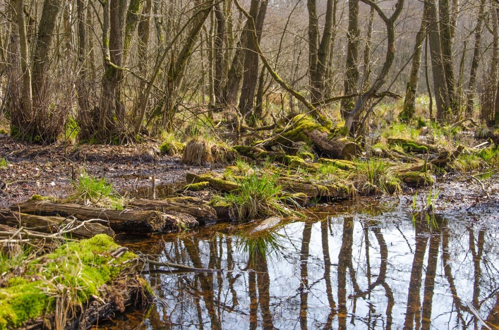 Wald Steg See 1